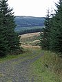 Forest Track - geograph.org.uk - 570016.jpg