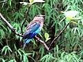 Forest bird.jpg