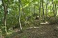 Forest in Mt.Ashio 01.jpg