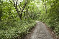 Forest in Mt.Kaba 05.jpg
