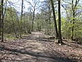 Forest track in spring - geograph.org.uk - 1265480.jpg