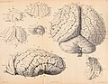 Forhandlinger i Videnskabs-selskabet i Christiania. (1885) (14592607357).jpg