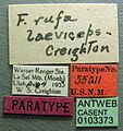 Formica laeviceps casent0103373 label 1.jpg