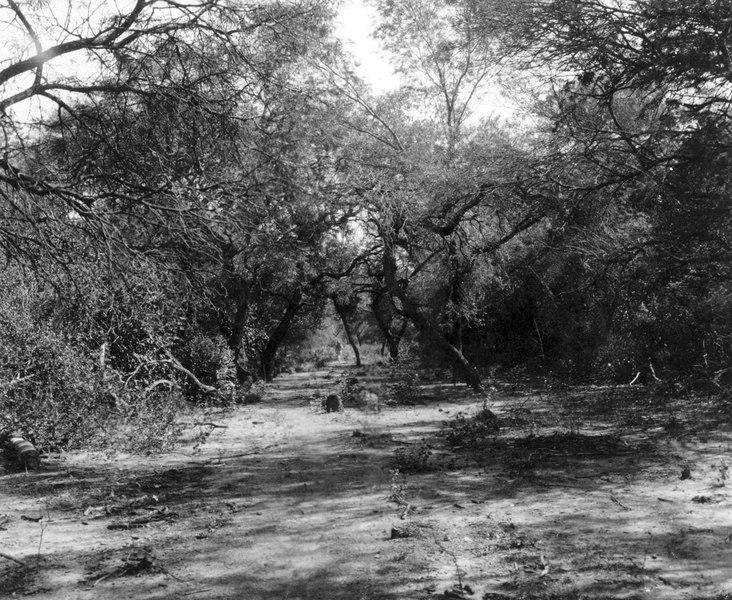 File:Fortin Crevaux, bolivianska Chaco. Torrskog vid fortet. En av fyra bilder. Gran Chaco. Bolivia - SMVK - 003612.tif