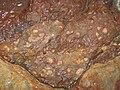 Fossils in ferruginous siliciclastics (Vinton Member, Logan Formation, Lower Mississippian; Irish Ridge East roadcut, near Trinway, Ohio, USA) 2 (33236749915).jpg