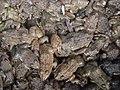 Frog texture.jpg