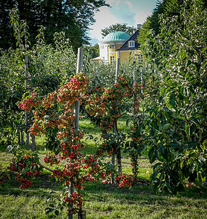 Frydenlund - The house viewed from the orchard1749