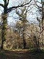 Fryern Court Wood - geograph.org.uk - 291605.jpg