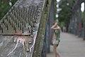 Fußgängerbrücke über den Teltowkanal in Tempelhof (8999037862).jpg