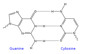 GC DNA base pair.svg