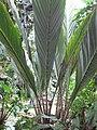 Gardenology-IMG 8002 hunt10aug.jpg