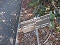 Gardenology.org-IMG 0380 rbgs10dec.jpg
