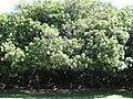 Gardenology.org-IMG 0473 rbgs10dec.jpg