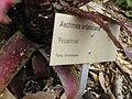 Gardenology.org-IMG 2183 rbgs11jan.jpg