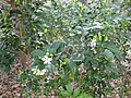 Gardenology.org-IMG 7266 qsbg11mar.jpg