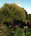Gardens Fens2 Oct2009.jpg