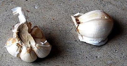 Garlic1700ppx.jpg