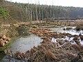 Gdynia Wielki Kack, zarosłe łąki - panoramio.jpg