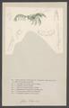 Gebia littoralis - - Print - Iconographia Zoologica - Special Collections University of Amsterdam - UBAINV0274 006 02 0032.tif