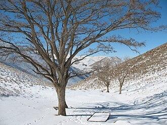 Arak, Iran - Image: Gerdo