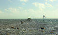 Gfp-florida-biscayne-national-park-birds-resting-on-rocks.jpg