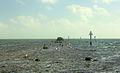 Gfp-florida-biscayne-national-park-birds-resting-on-rocks.jpg
