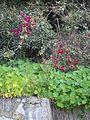 Gibraltar plants February 2012.jpg