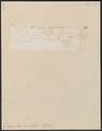 Ginglymostoma cirratum - 1700-1880 - Print - Iconographia Zoologica - Special Collections University of Amsterdam - UBA01 IZ14100117.tif