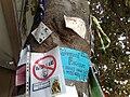Giovanni Falcone tree4.jpg