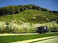 Glottertal - panoramio (44).jpg