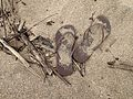 Gone Barefootin' (8720238316).jpg