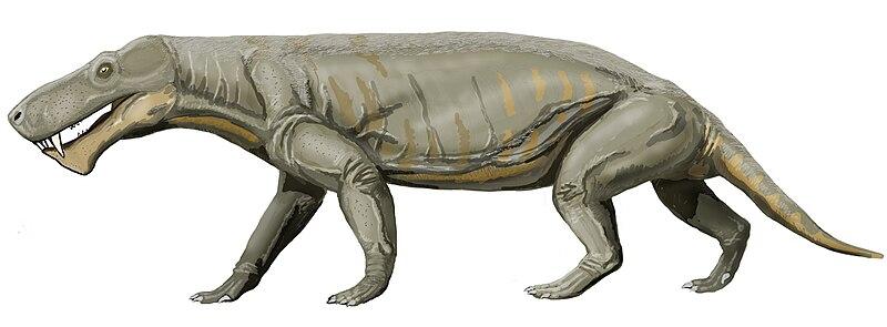Gorgonops