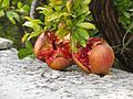 Granatäpfel am Baum.jpg