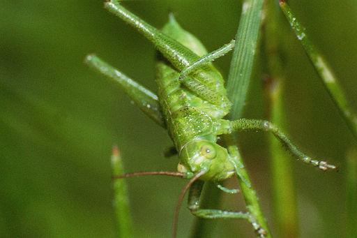 wikijunior colors  green