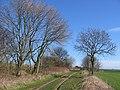 Green Lane, North Field - geograph.org.uk - 357424.jpg