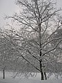 Green Park in the snow - geograph.org.uk - 1225558.jpg
