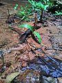 Green grasses in sand mixed soil.jpg