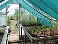 Greenhouse (14302099579).jpg