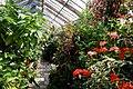 Greenhouse interior in Parham House Walled Garden.jpg