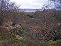 Greshornish Forest - geograph.org.uk - 1195929.jpg