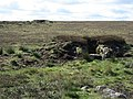 Grouse butts (2) - geograph.org.uk - 416549.jpg