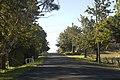 Gulgong NSW 2852, Australia - panoramio (7).jpg