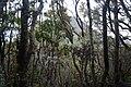 Gunung Gede Pangrango, cibodas, bogor, jawa barat, 02032011 02.jpg