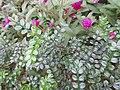 HK 灣仔 Wan Chai 囍匯 The Avenue Rooftop Garden terrace plants Oct 2017 IX1 purple flower ball green sword leaves 02.jpg