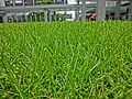 HK Wan Chai CRB 華潤大廈 China Resources Building outside green grass lawn May 2013.JPG