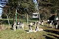Halver - Schlittenhunderennen 02 ies.jpg