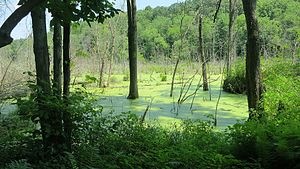 Southwick, Massachusetts - Image: Hart's Pond from Metacomet Monadnock Trail, July 2013