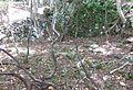 Hashino iron mine 5.JPG