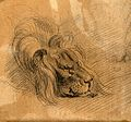 Head of a sleeping lion. Drawing, c. 1789. Wellcome V0009298ER.jpg