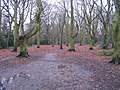 Hearsall Common, wet underfoot - geograph.org.uk - 640116.jpg